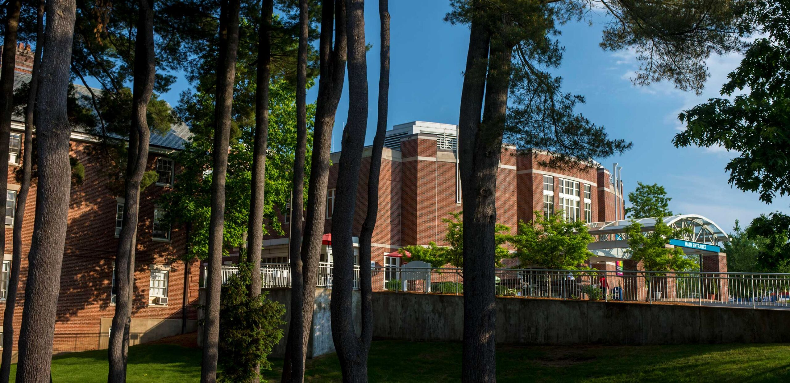 Tall pines at Cooley Dickinson Hospital