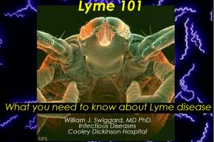 Lyme 101: What You Need to Know About Lyme Disease