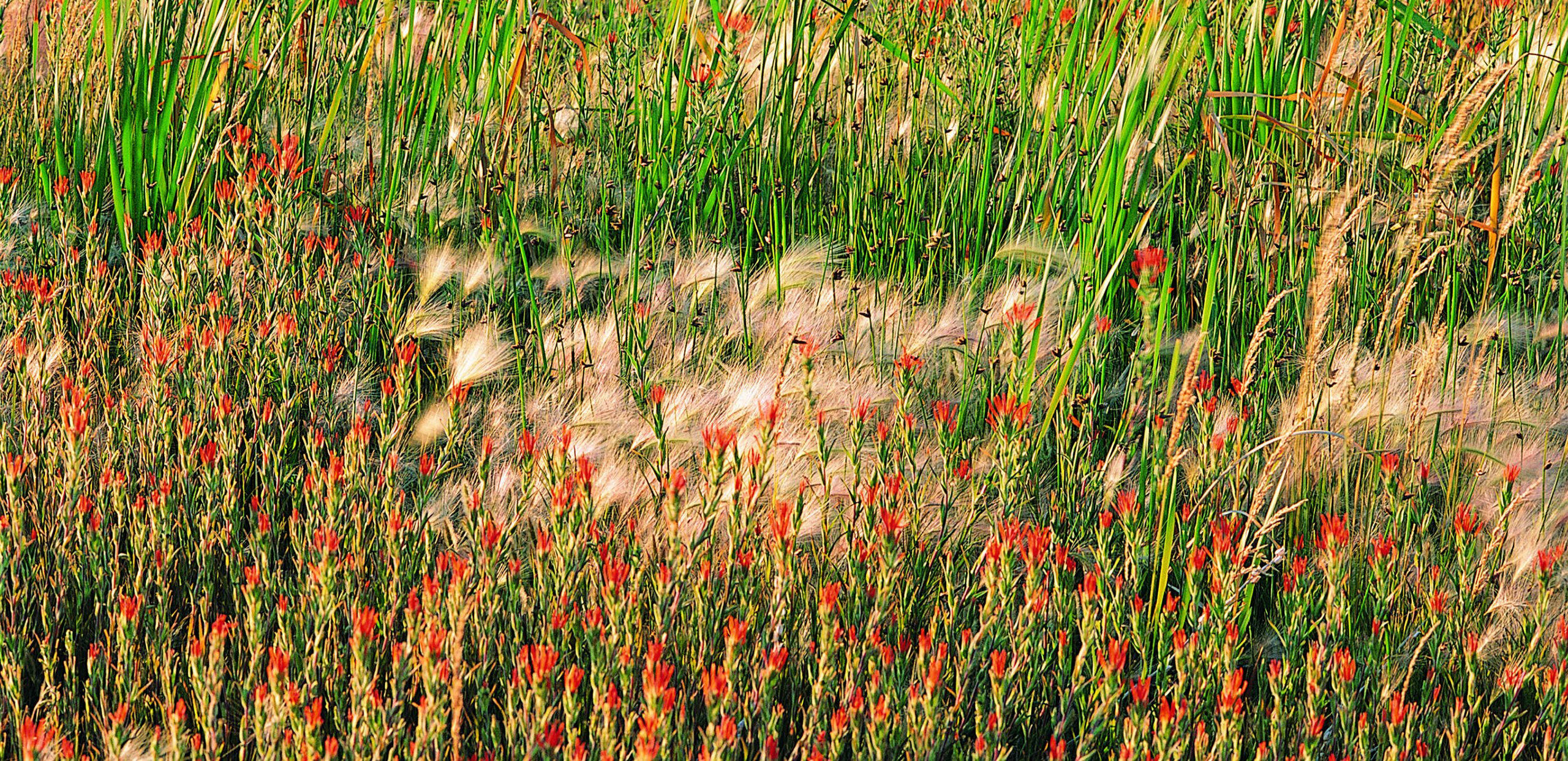 Grasses and wildflowers, Cooley Dickinson Health Care System, Northampton, MA 01060.