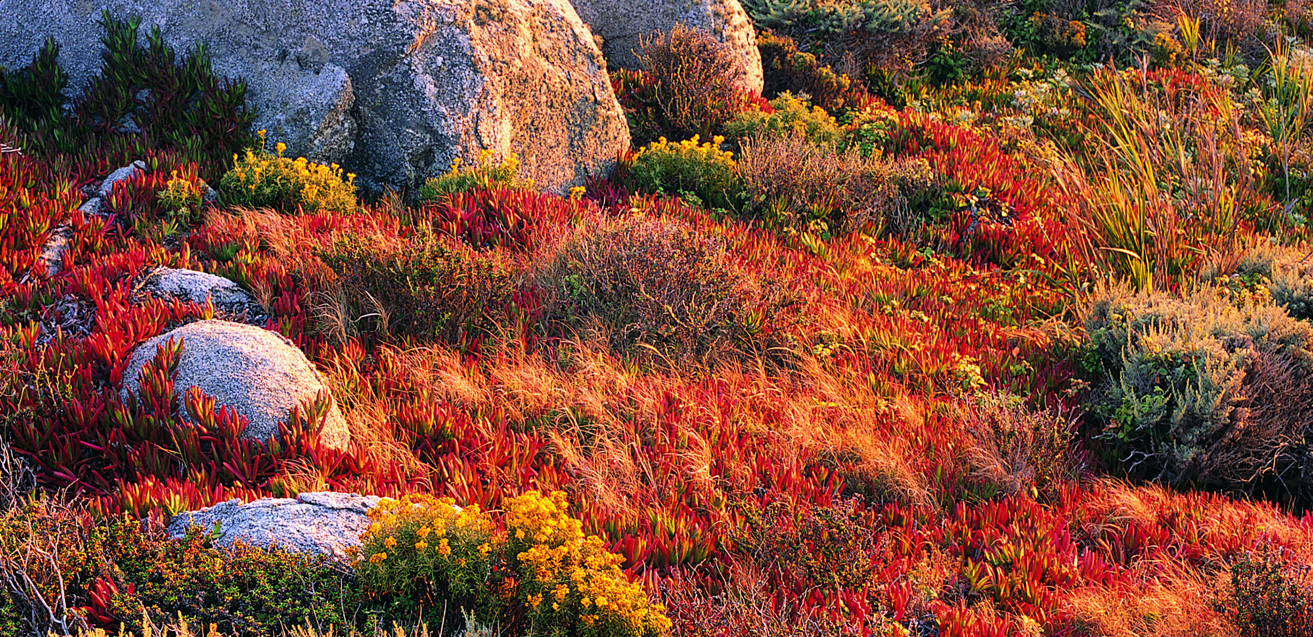 Rocks, grasses, and wildflowers, Cooley Dickinson Health Care System, Northampton, MA 01060.