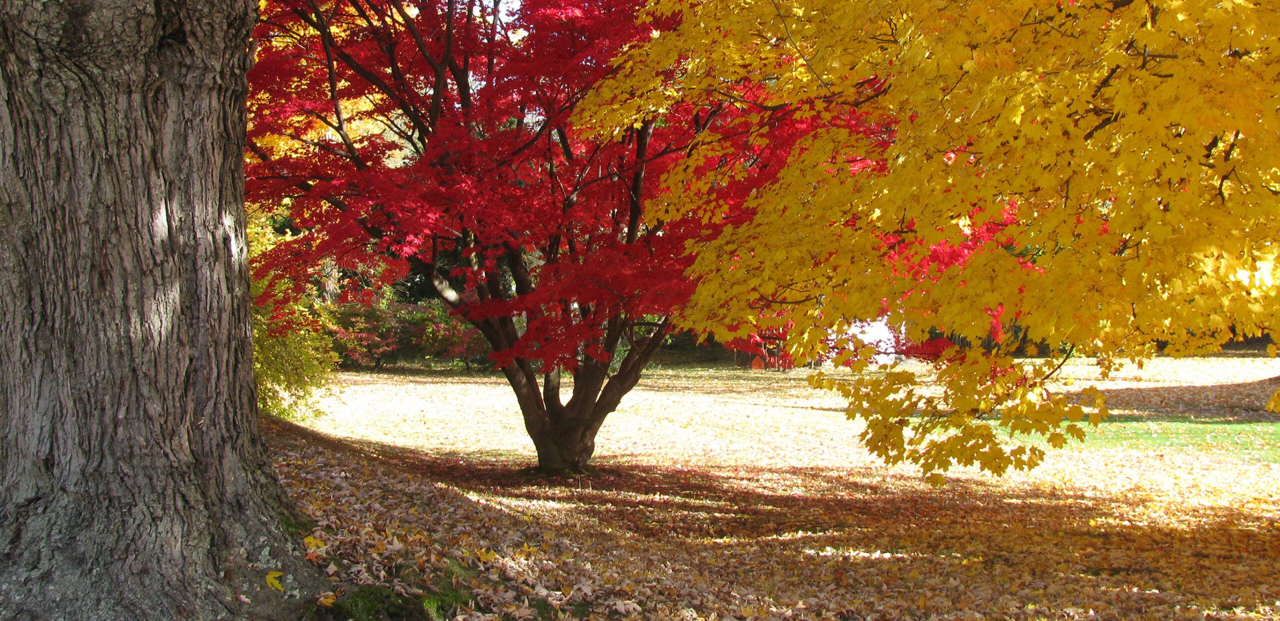 Autumn scene, Cooley Dickinson Health Care System, Northampton, MA 01060.